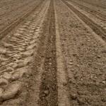 priprema zemljista sadnja sadnica lesnika